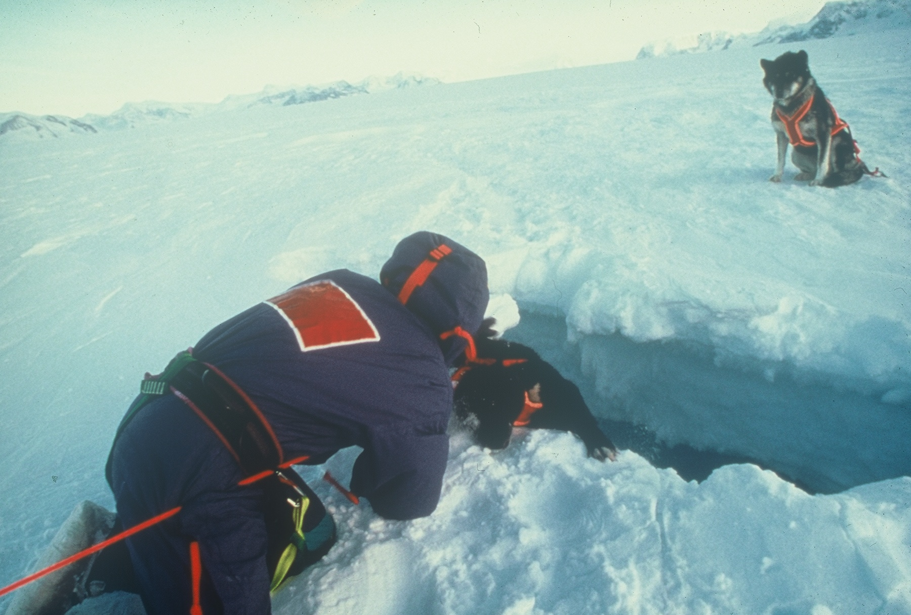 Rescuing the dog fell into a crevasse